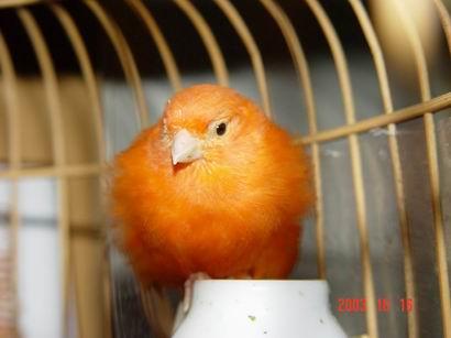 壁纸 动物 鸟 鸟类 雀 鹦鹉 410_307