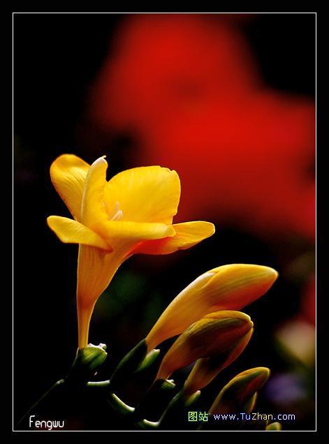 春天里的第一朵鲜花