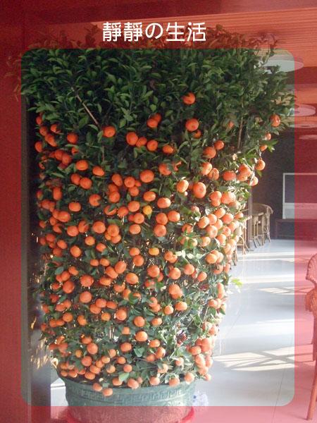 大个桔子树+大堆水果+……=狗狗年最后一天工作日