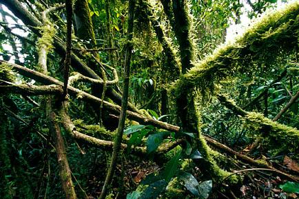 《热带雨林》—— 全景