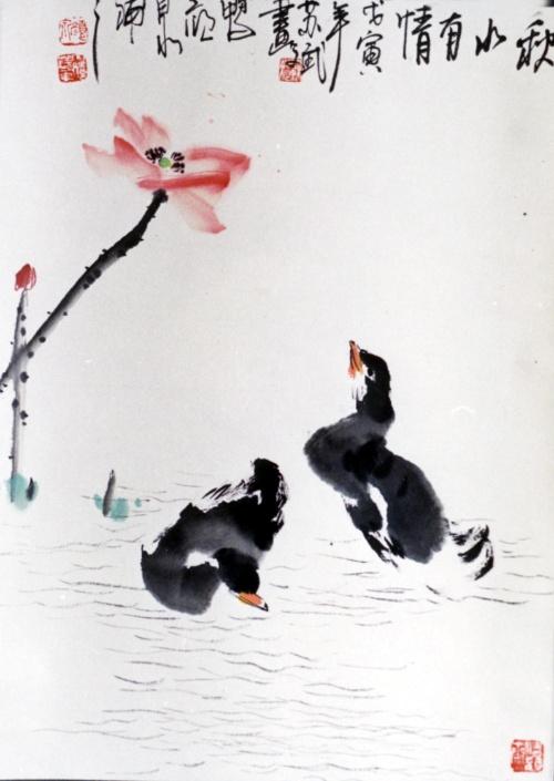 我常常可以看到这些可爱的大型水鸟或游弋于