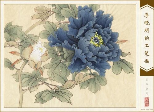手绘彩铅牡丹花图片