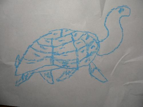 儿子的绘画作品大都是动物素描