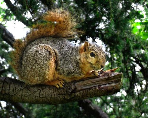 呵呵,小松鼠在阳台做窝了!