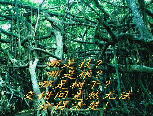圆月柳树背景图