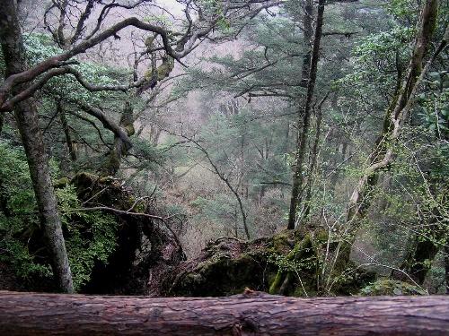 风景垭也在神农顶风景区内,据旅游介绍上说,垭口掩于箭竹林中,下临