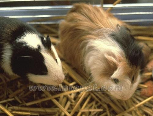 优点是打扫方便,缺点是动物的脚容易陷入铁丝间而造成受伤.